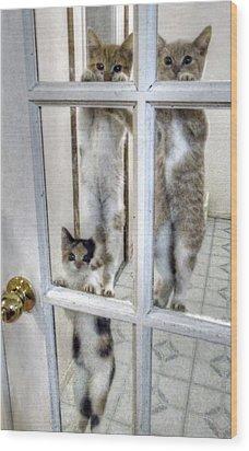 Three Kitten Door Deco Wood Print by Aliceann Carlton