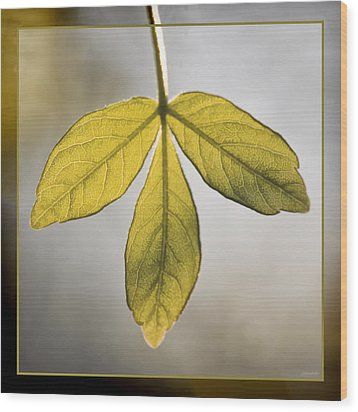 Wood Print featuring the photograph Three Leaves by Jaki Miller