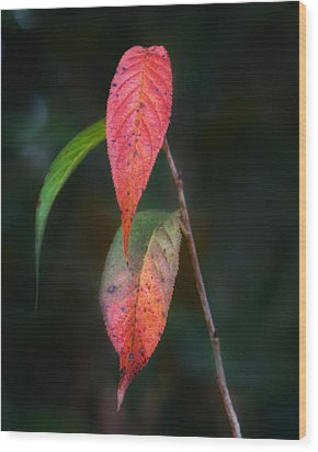 Three Leaves Of Fall Wood Print by Brenda Bryant