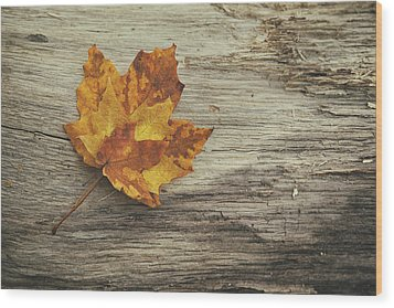 Three Leaves Wood Print by Scott Norris
