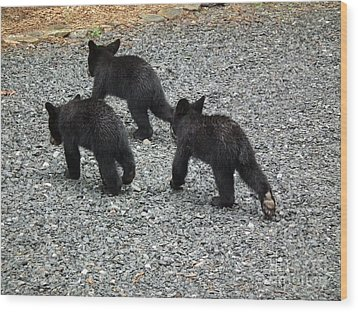 Wood Print featuring the photograph Three Little Bears In Step by Jan Dappen