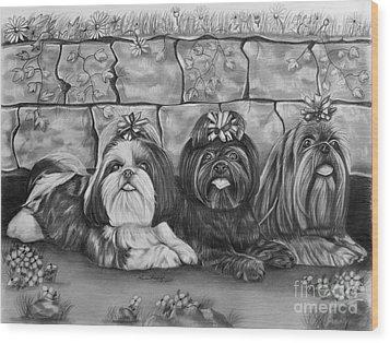 Three Little Shih Tzus Wood Print