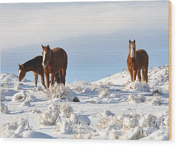 Three Mustangs In Snow Wood Print by Vinnie Oakes