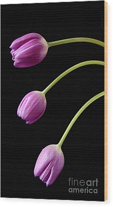 Three Purple Tulips Wood Print by Eden Baed
