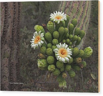 Three Saguaro Blossoms And Many Buds Wood Print