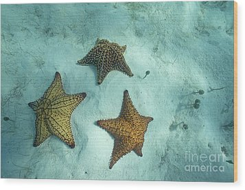 Three Starfishes On Sandy Seabed Wood Print by Sami Sarkis