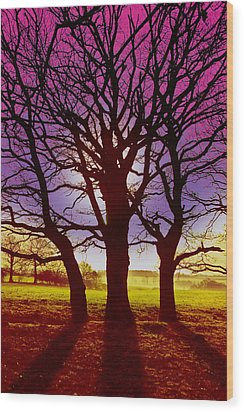 Wood Print featuring the digital art Three Trees by David Davies