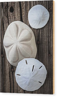 Three Types Of Sand Dollars Wood Print by Garry Gay