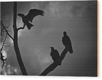 Wood Print featuring the photograph Three Vultures by Bradley R Youngberg