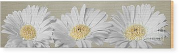 Wood Print featuring the photograph Three White Daisies by Eden Baed