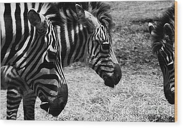 Wood Print featuring the photograph Three Zebras by Tom Brickhouse