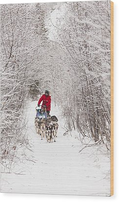 Through A Tunnel Of Snowy Trees Wood Print by Tim Grams