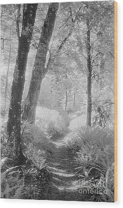 Through The Bush Wood Print by Colin and Linda McKie
