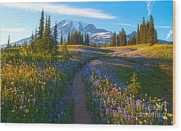 Through The Golden Meadows Wood Print by Mike Reid