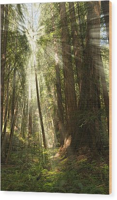 Through The Trees Wood Print by Mick Burkey
