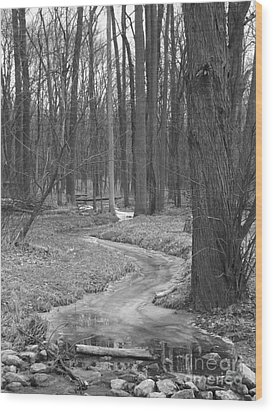Through The Woods Wood Print by Sara  Raber