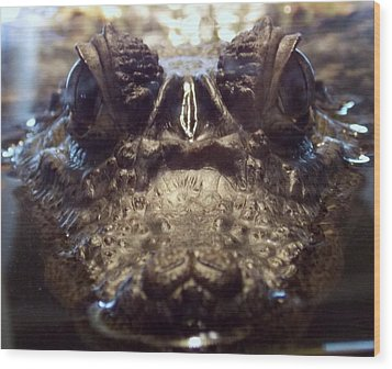Wood Print featuring the photograph It's So Quiet, You Can Hear The Gators Breathing by John Glass