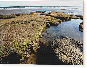 Wood Print featuring the photograph Tide Pool II by Amanda Holmes Tzafrir