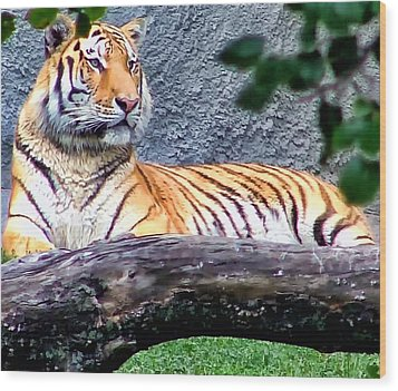 Wood Print featuring the photograph Tiger 1 by Dawn Eshelman