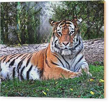 Wood Print featuring the photograph Tiger 2 by Marty Koch
