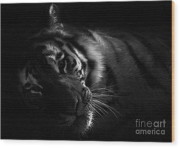 Tiger Beauty Wood Print