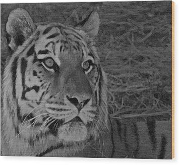 Tiger Bw Wood Print by Ernie Echols