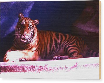Wood Print featuring the photograph Tiger Cub by Victoria Lakes