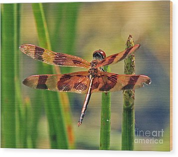 Tiger Dragonfly Wood Print by Larry Nieland