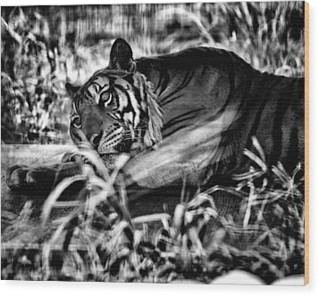 Wood Print featuring the photograph Tiger by Hayato Matsumoto