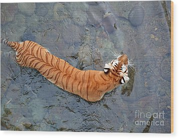 Wood Print featuring the photograph Tiger In The Stream by Robert Meanor