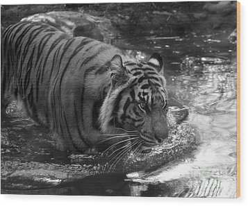 Wood Print featuring the photograph Tiger In The Water by Lisa L Silva