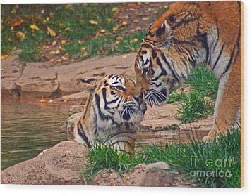 Tiger Kiss Wood Print by David Rucker