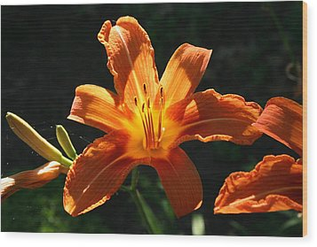 Tiger Lily 1 Wood Print by Jim Gillen