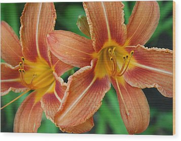 Tiger Lily 3 Wood Print by Jim Gillen