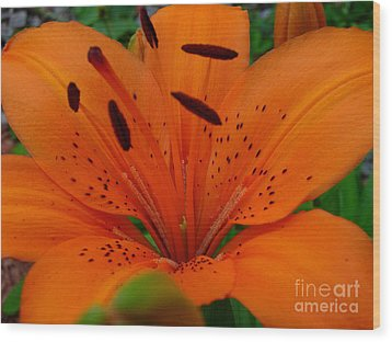 Wood Print featuring the photograph Tiger Lily by Bianca Nadeau