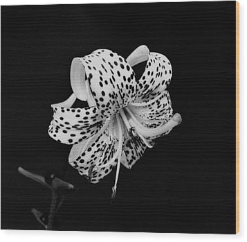 Tiger Lily In Black And White Wood Print by Sandy Keeton