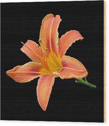 'tiger Lily' Wood Print
