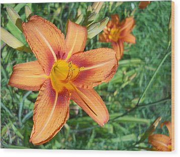 Wood Print featuring the photograph Tiger Lily by Yolanda Raker