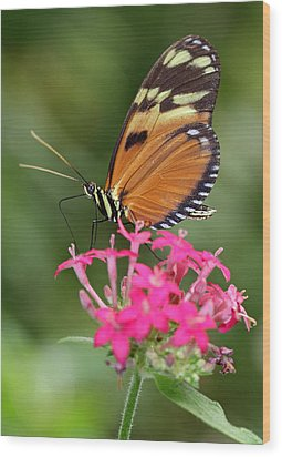 Tiger Longwing Wood Print by Juergen Roth
