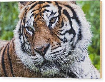 Tiger On Grass Wood Print by Goyo Ambrosio