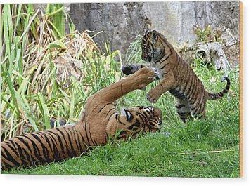 Tiger Play Wood Print