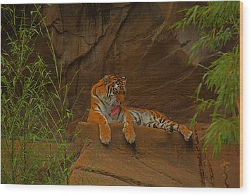 Wood Print featuring the photograph Tiger Resting by Andy Lawless