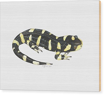 Tiger Salamander Wood Print