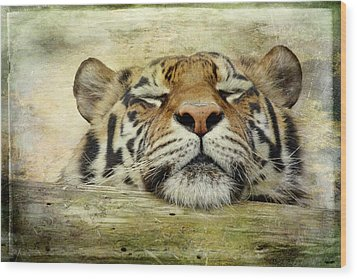 Tiger Snooze Wood Print by Athena Mckinzie
