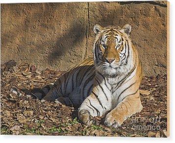 Tiger Wood Print by Steven Ralser