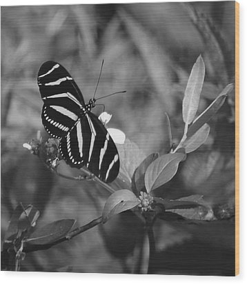 Tiger Stripe Butterfly Wood Print by Joseph G Holland