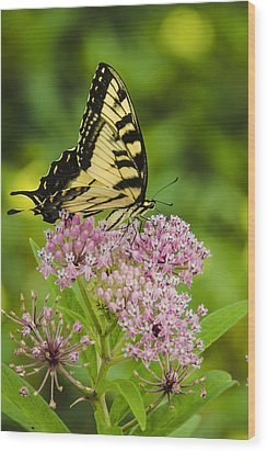 Wood Print featuring the photograph Tiger Swallow Tail by Bradley Clay