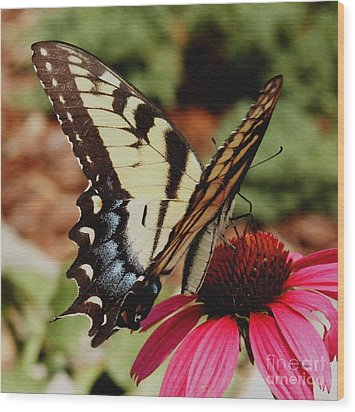 Wood Print featuring the photograph Tiger Swallowtail  by James C Thomas