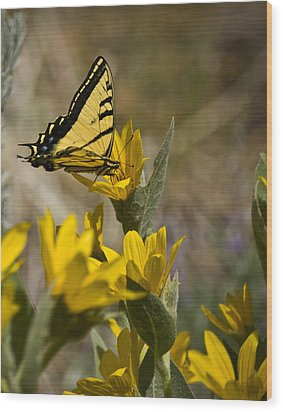Wood Print featuring the photograph Tiger Swallowtail Butterfly by Janis Knight