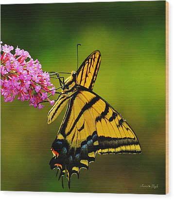 Tiger Swallowtail Butterfly Wood Print by Karen Slagle
